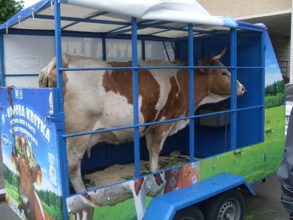 Три молочних продукти на день